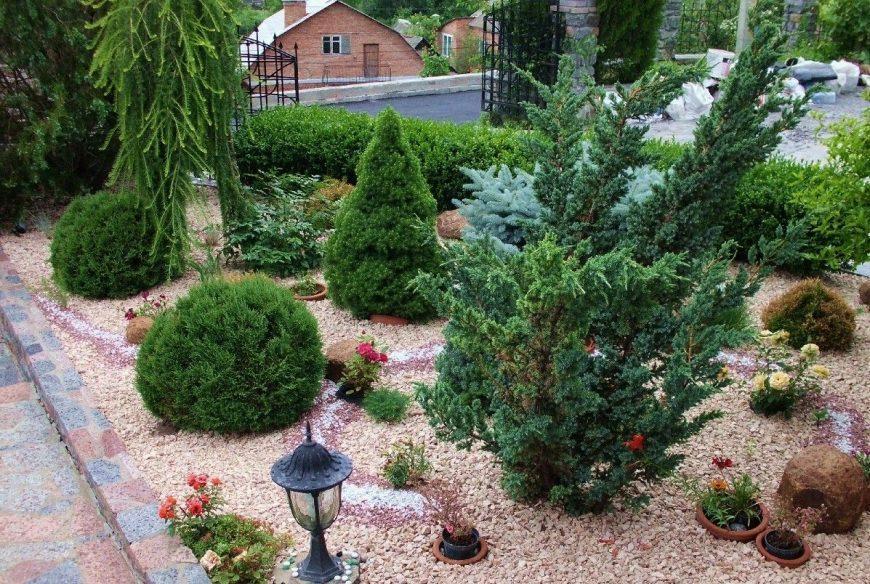 Лучшие хвойные растения для сада: все виды и сорта. ТОП-150 фото красивых хвойников на дачном участке