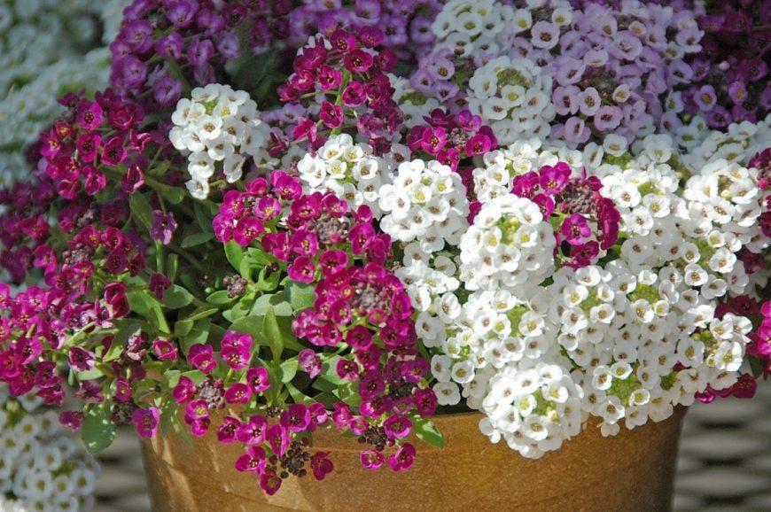 Лучшие однолетние цветы цветущие все лето — каталог самых неприхотливых цветов для дачи (140 фото)